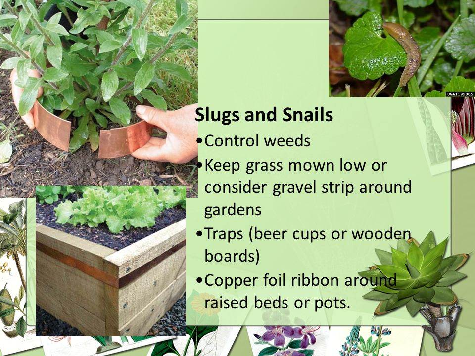 Slugs and Snails Control weeds