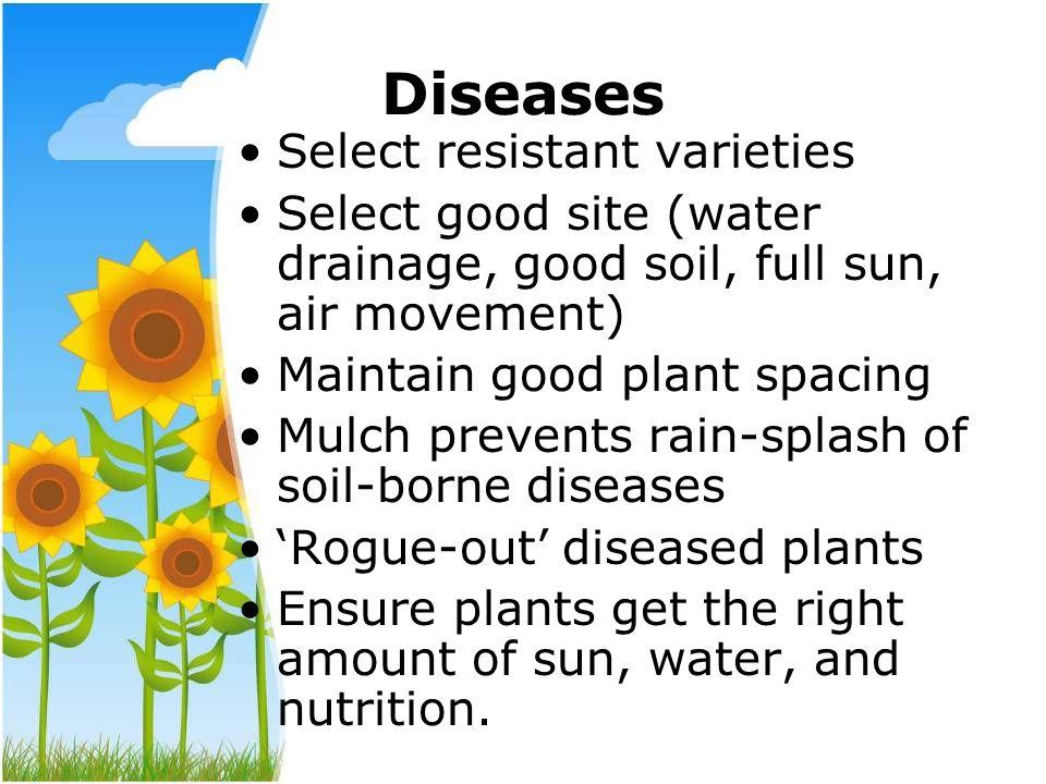 Diseases Select resistant varieties