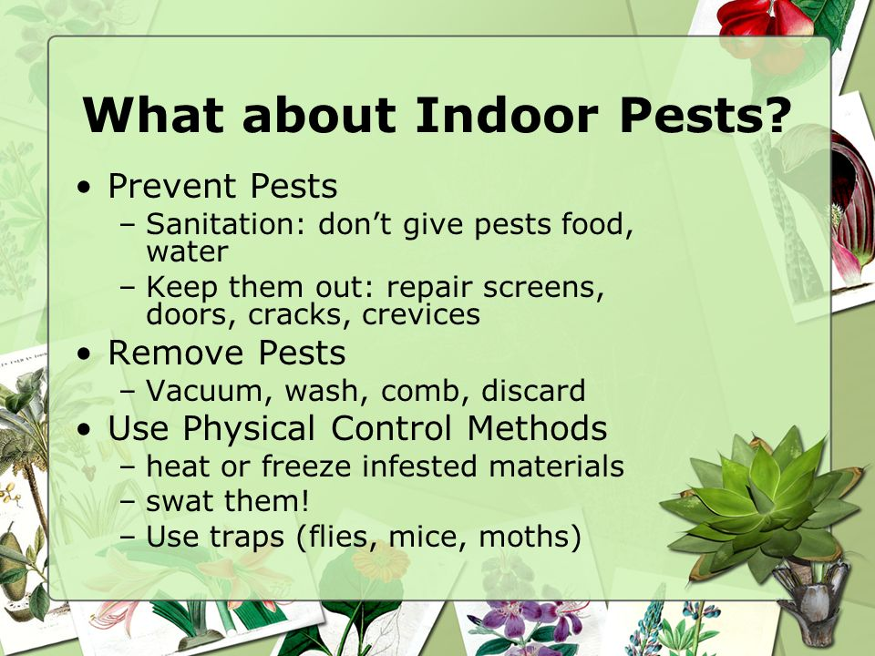What about Indoor Pests