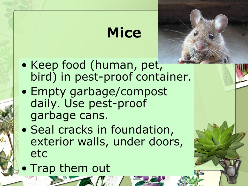 Mice Keep food (human, pet, bird) in pest-proof container.