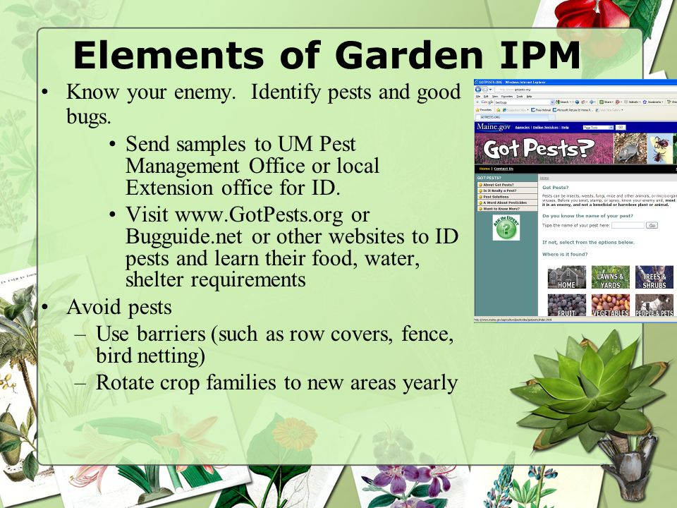 Elements of Garden IPM Know your enemy. Identify pests and good bugs.