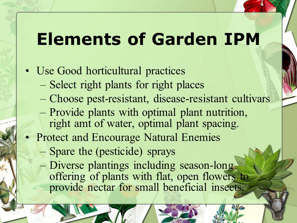 Elements of Garden IPM Use Good horticultural practices