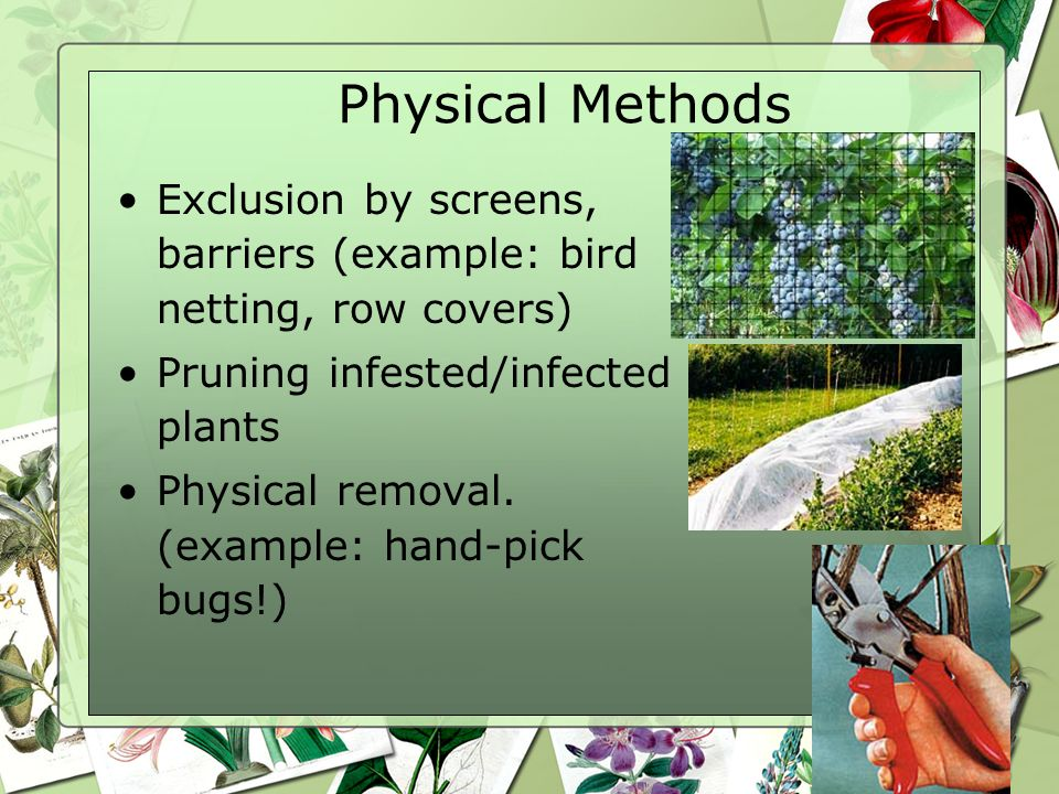 Physical Methods Exclusion by screens, barriers (example: bird netting, row covers) Pruning infested/infected plants.