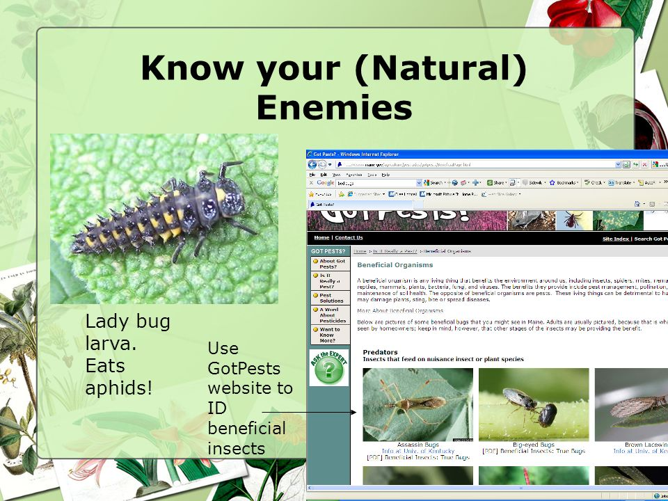 Know your (Natural) Enemies