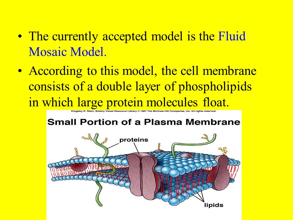 The currently accepted model is the Fluid Mosaic Model.