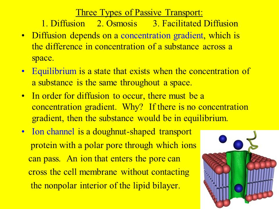 Three Types of Passive Transport: 1. Diffusion. 2. Osmosis. 3