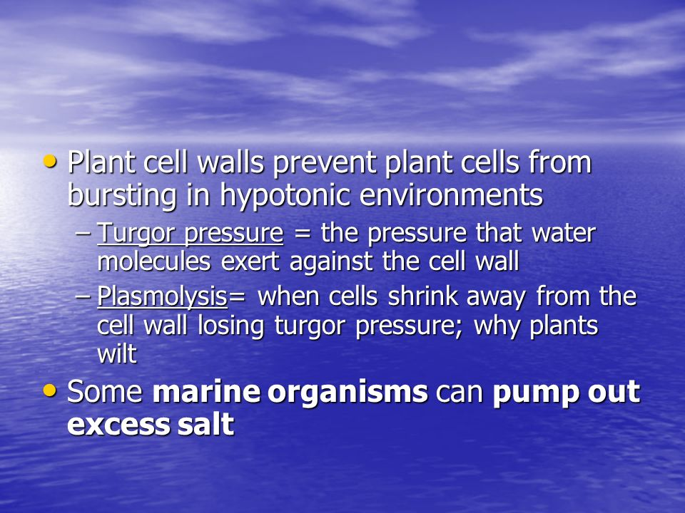 Some marine organisms can pump out excess salt