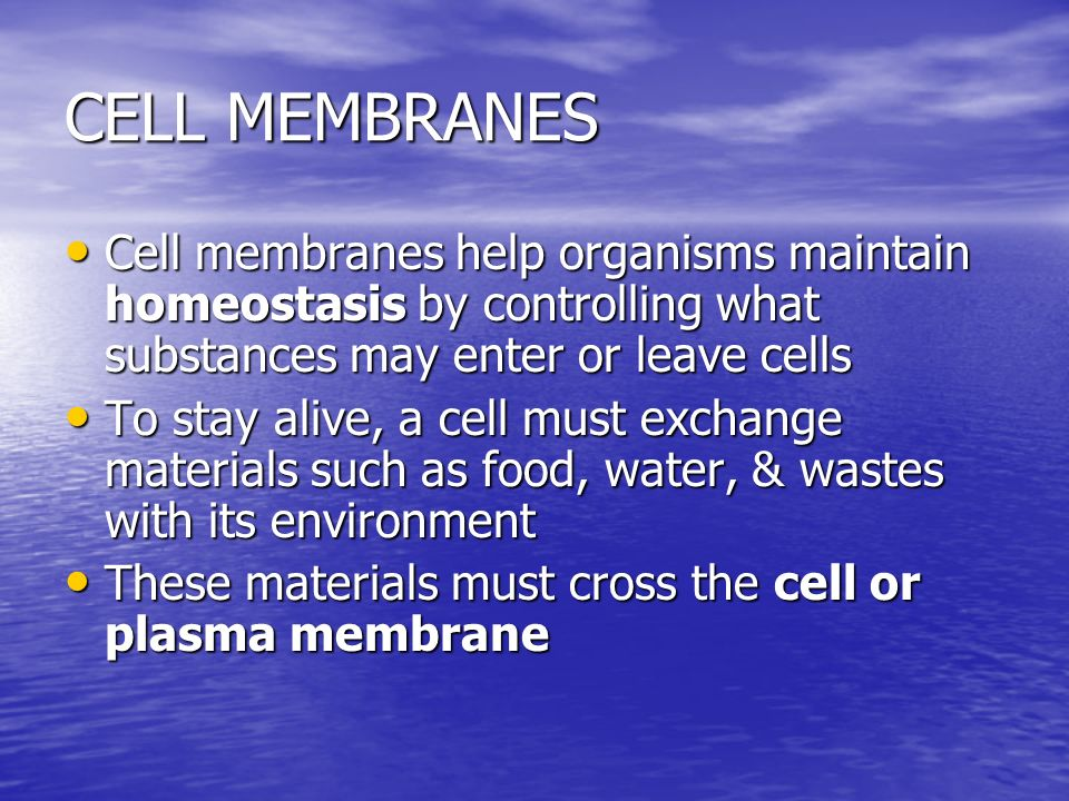 CELL MEMBRANES Cell membranes help organisms maintain homeostasis by controlling what substances may enter or leave cells.