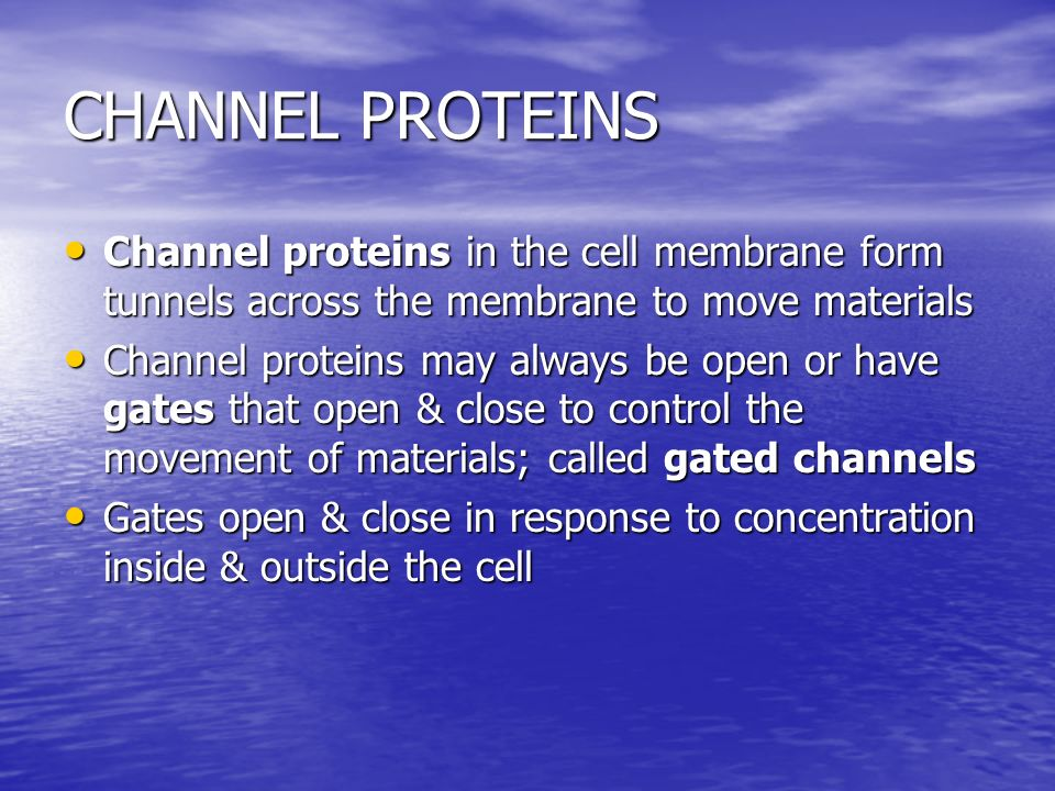 CHANNEL PROTEINS Channel proteins in the cell membrane form tunnels across the membrane to move materials.