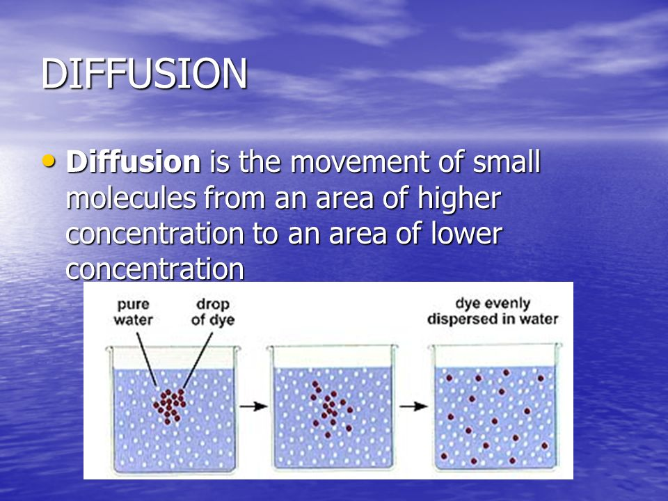 DIFFUSION Diffusion is the movement of small molecules from an area of higher concentration to an area of lower concentration.
