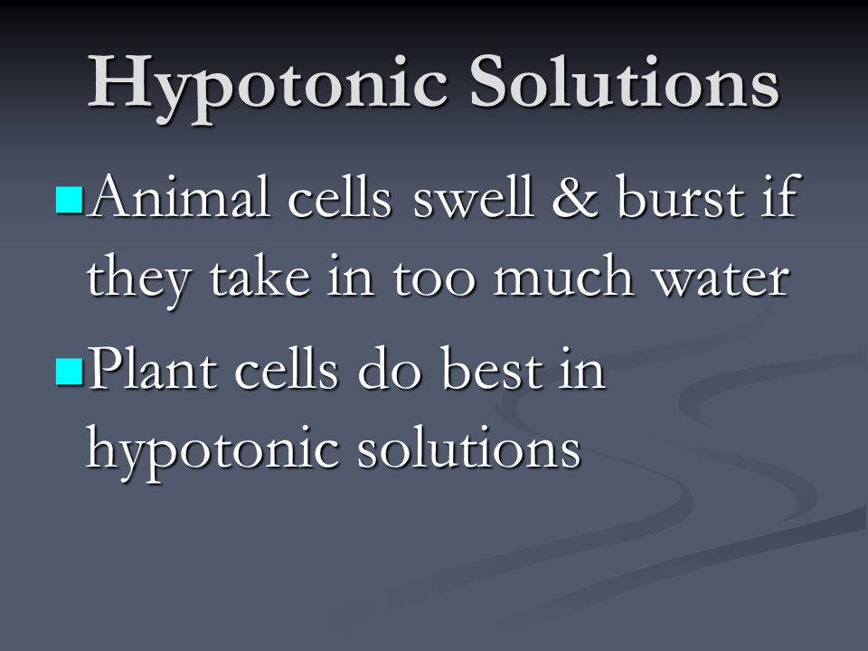Hypotonic Solutions Animal cells swell & burst if they take in too much water.