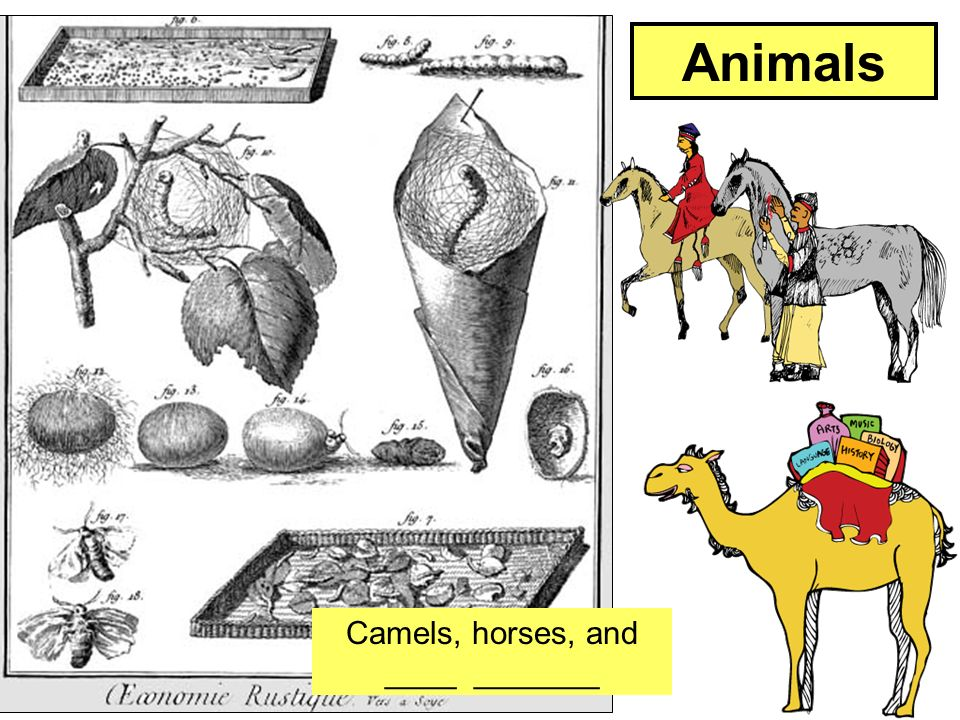 Camels, horses, and ____ _______