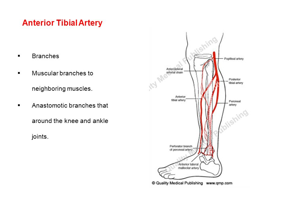 Vascular problems of the upper and lower limbs - ppt download