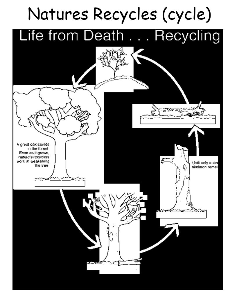 Natures Recycles (cycle)