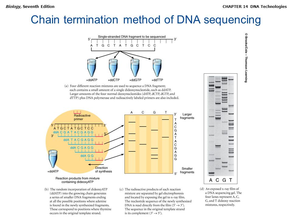 Chain termination method of DNA sequencing