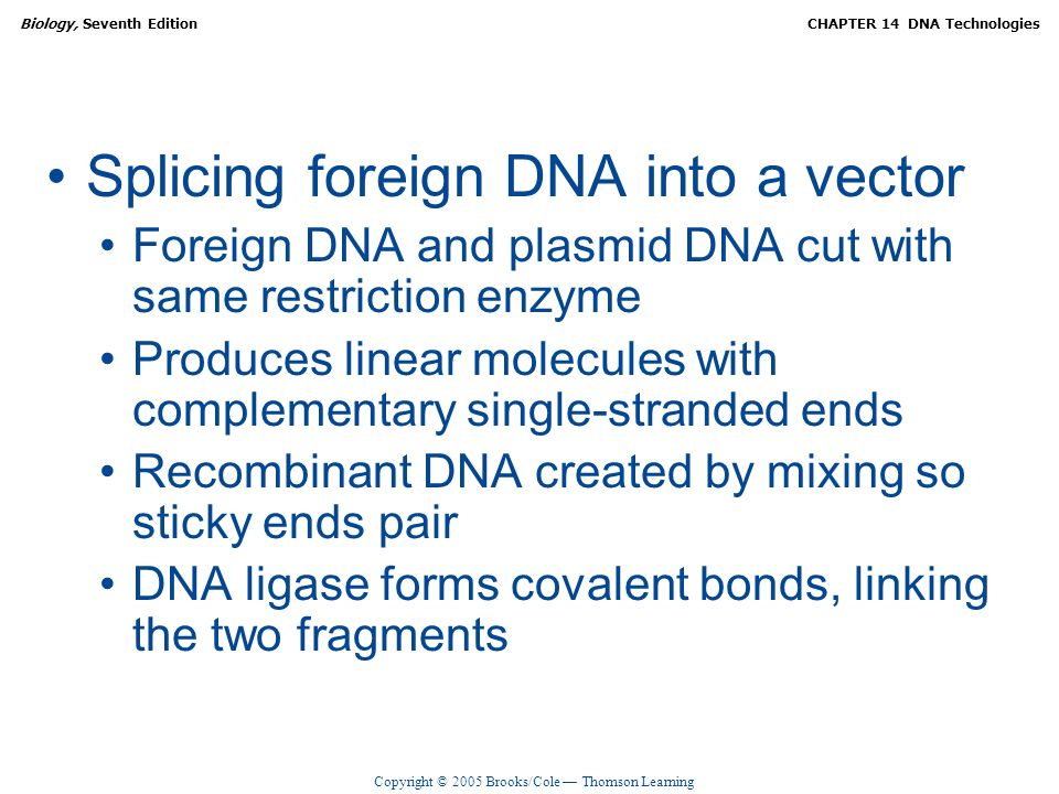 Splicing foreign DNA into a vector