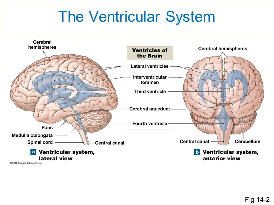 an introduction to parts of the brain The formal name for this attention grabbing part of the brain is the cerebrum the  sad thing is that we tend to forget the parts of the brain that lie below and.