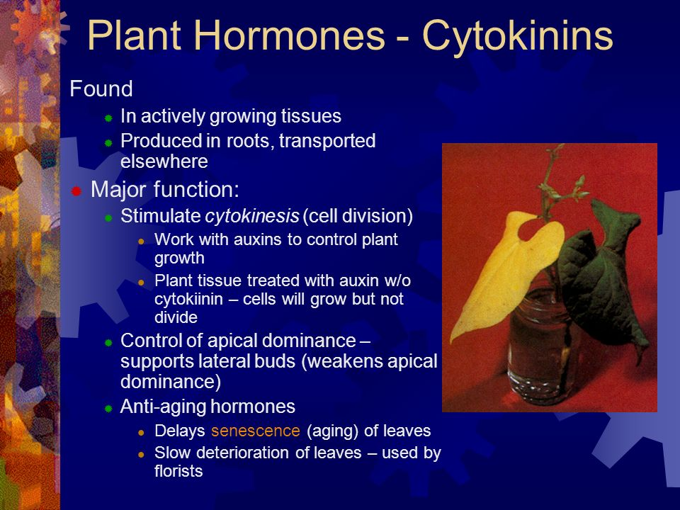 ap biology essay plant hormones Dixon's ap biology from  diversity of plant hormones and their  chapter 18 hw evolution timeline essay (write like an exam essay) evolution ap bio learning.