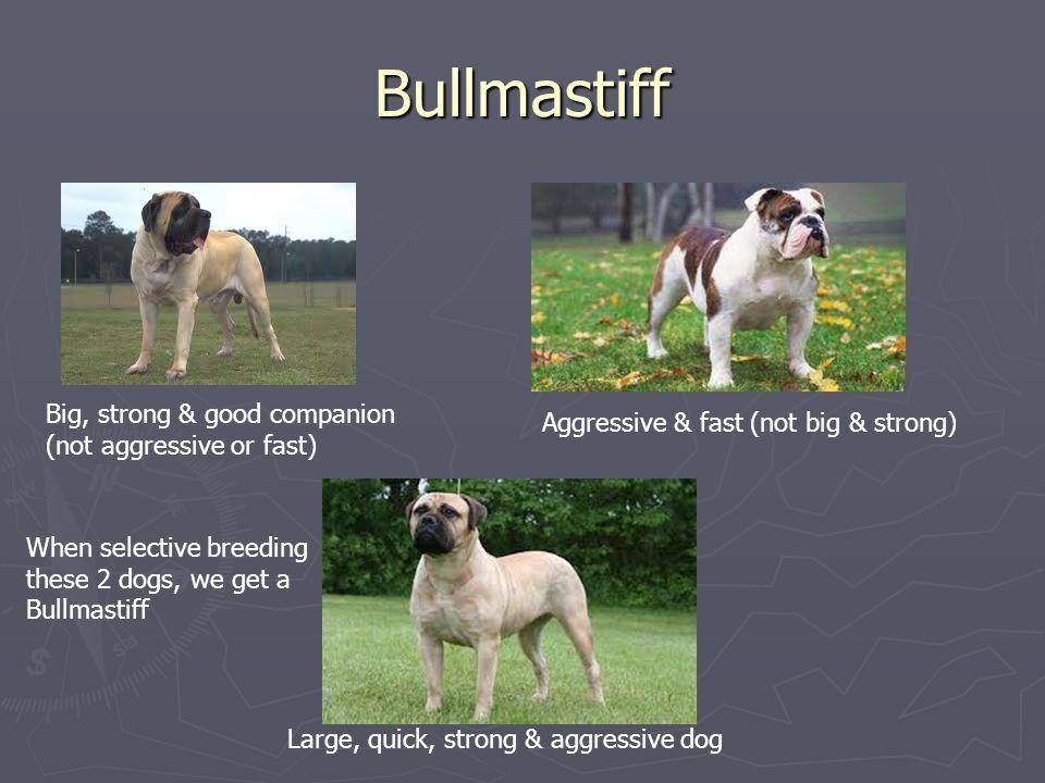 Dog Breeding Process