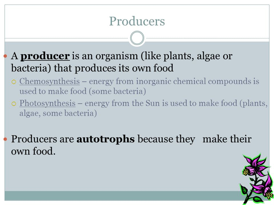 Producers A producer is an organism (like plants, algae or bacteria) that produces its own food.