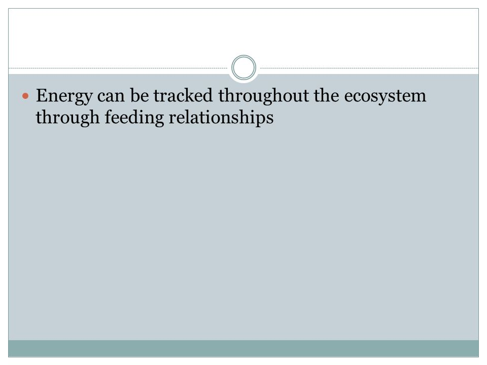 Energy can be tracked throughout the ecosystem through feeding relationships