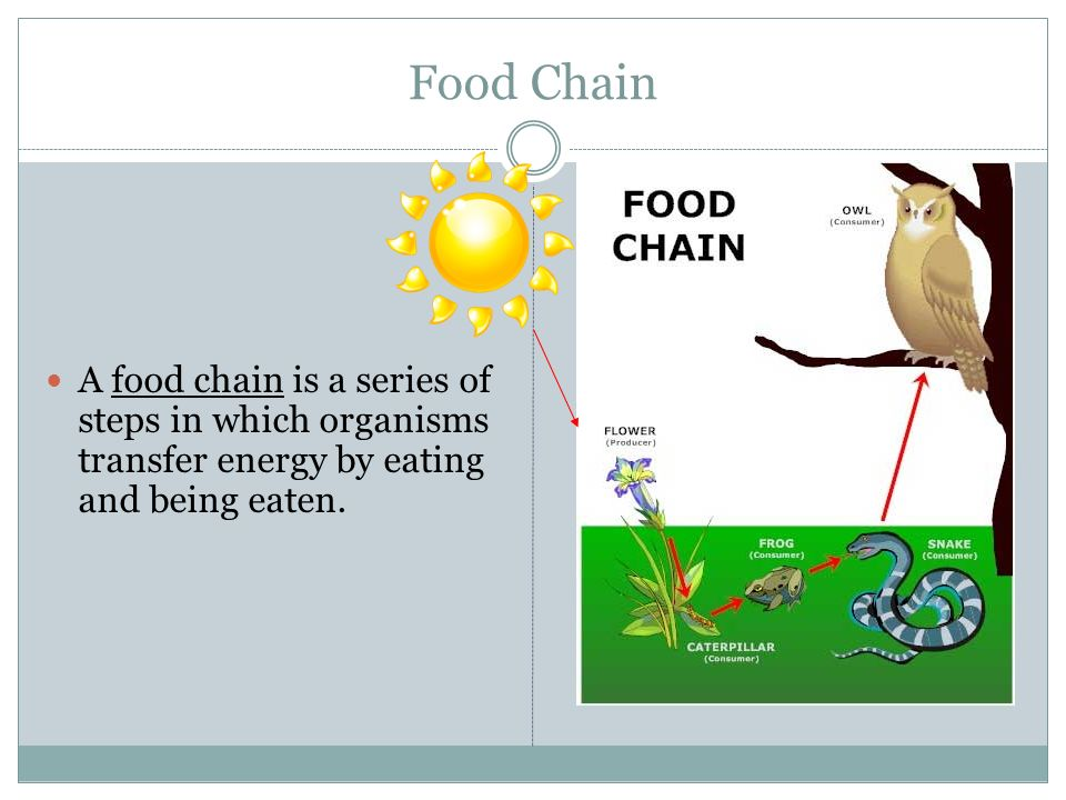 Food Chain A food chain is a series of steps in which organisms transfer energy by eating and being eaten.