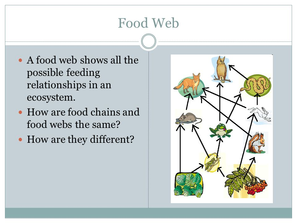 Food Web A food web shows all the possible feeding relationships in an ecosystem. How are food chains and food webs the same