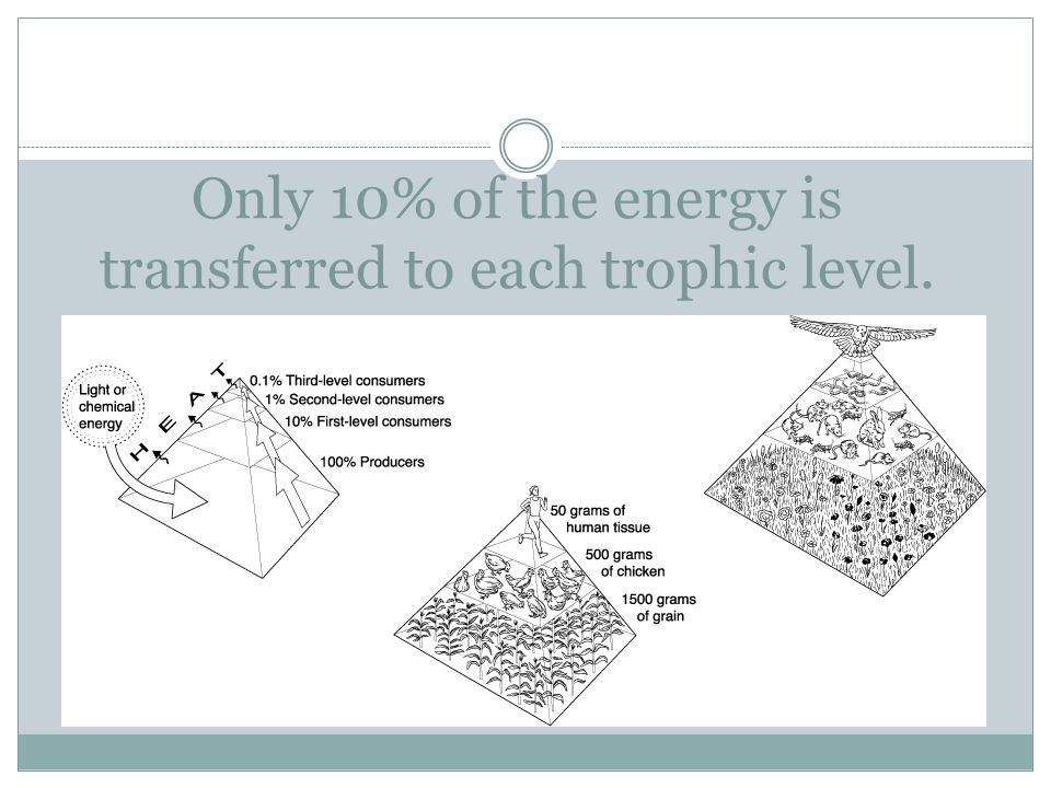 Only 10% of the energy is transferred to each trophic level.