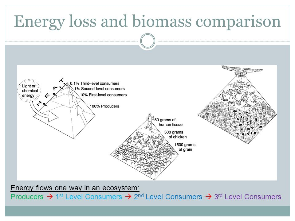 Energy loss and biomass comparison