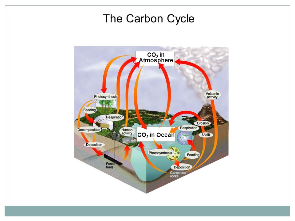 The Carbon Cycle Section 3-3 CO2 in Atmosphere CO2 in Ocean