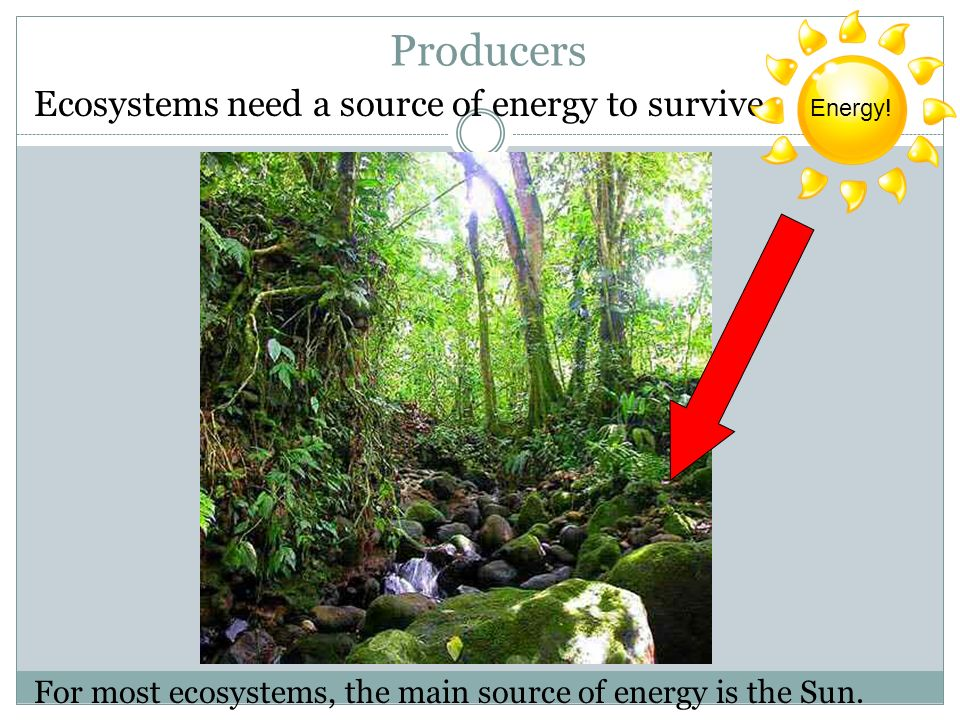 Producers Ecosystems need a source of energy to survive.