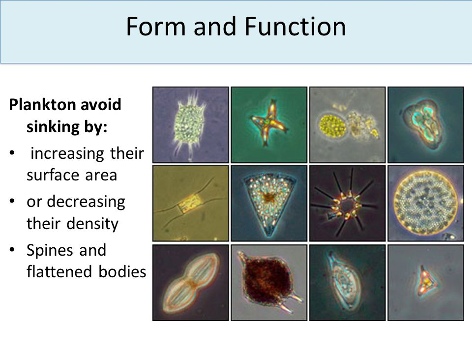 Form and Function Plankton avoid sinking by: