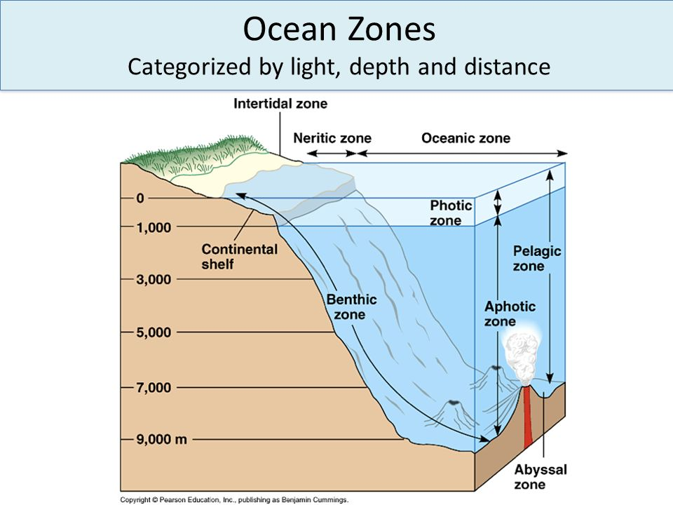 Ocean Zones Categorized by light, depth and distance