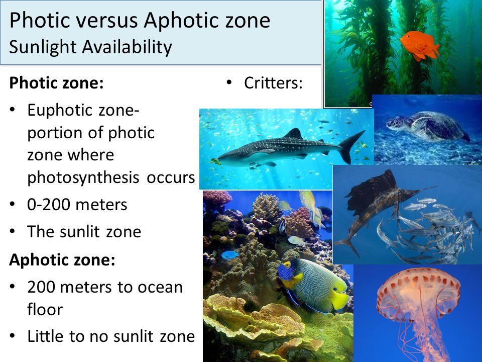 Photic versus Aphotic zone Sunlight Availability