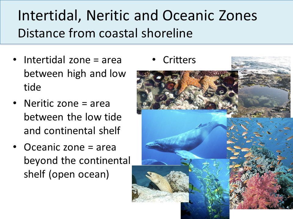Intertidal, Neritic and Oceanic Zones Distance from coastal shoreline