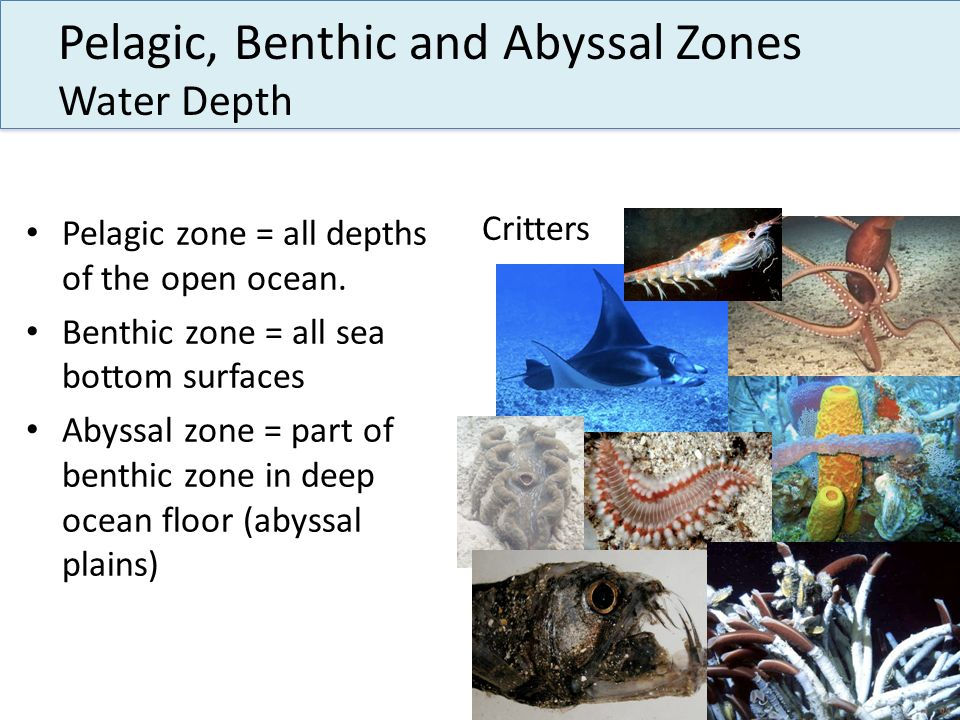 Pelagic, Benthic and Abyssal Zones Water Depth