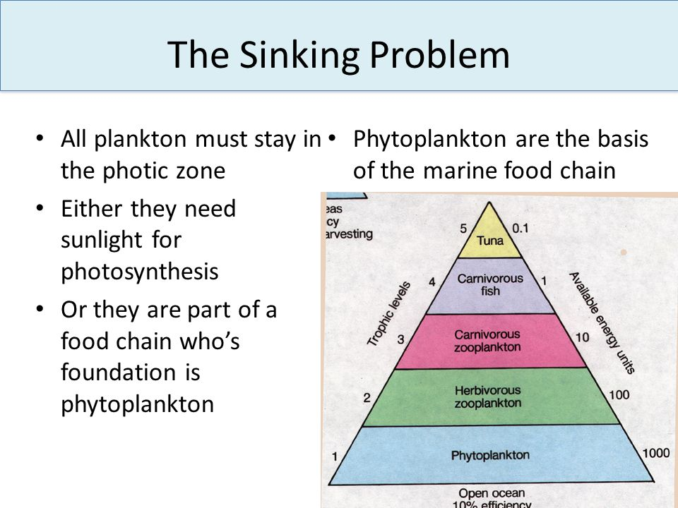 The Sinking Problem All plankton must stay in the photic zone