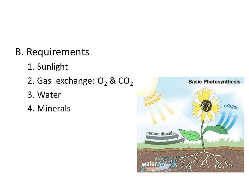 B. Requirements 1. Sunlight 2. Gas exchange: O2 & CO2 3. Water