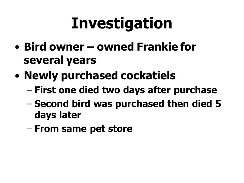 Investigation Bird owner – owned Frankie for several years