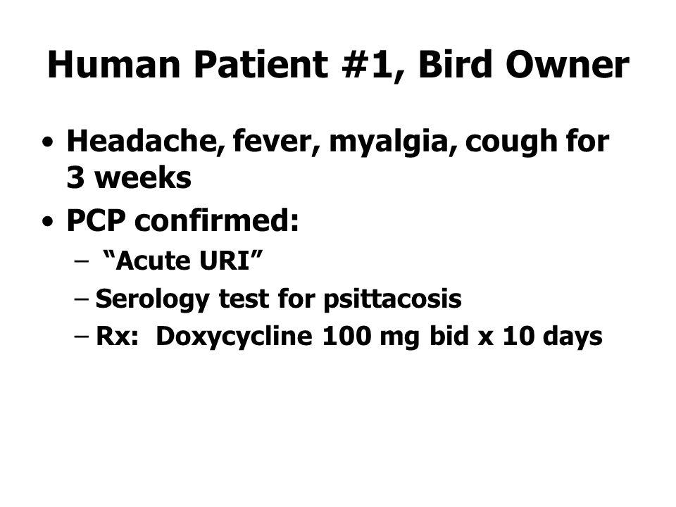 Human Patient #1, Bird Owner