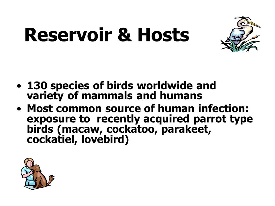 Reservoir & Hosts 130 species of birds worldwide and variety of mammals and humans.