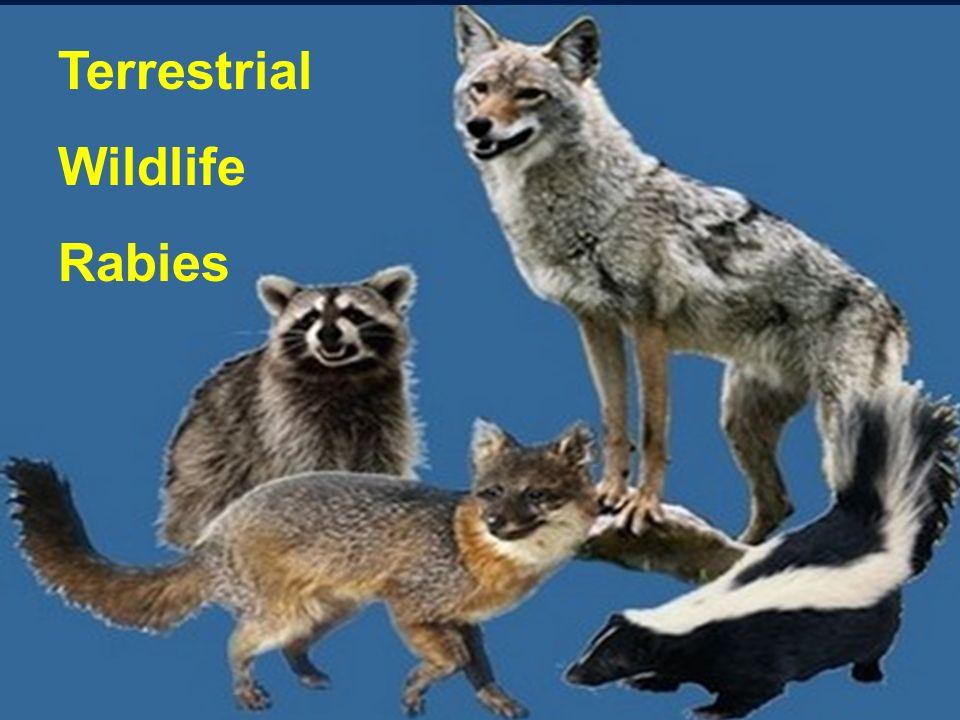 Terrestrial Wildlife Rabies
