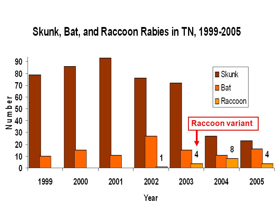 Raccoon variant