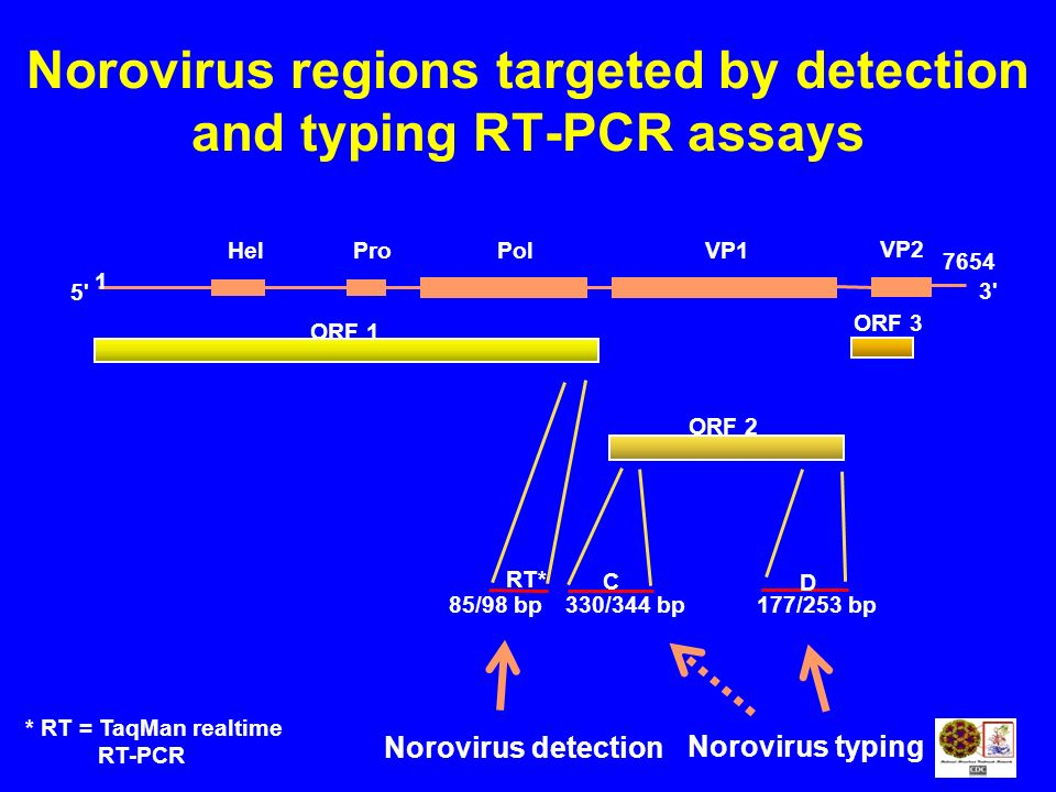 Norovirus regions targeted by detection and typing RT-PCR assays