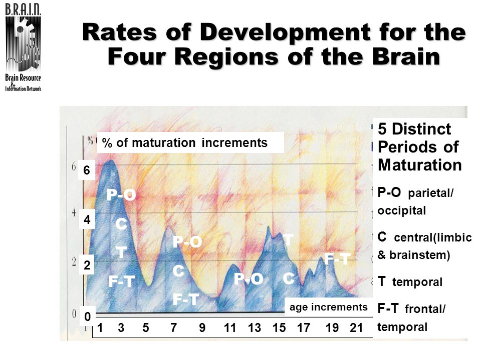 Rates of Development for the Four Regions of the Brain
