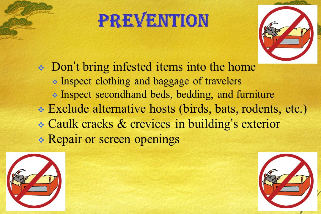 Prevention Don't bring infested items into the home