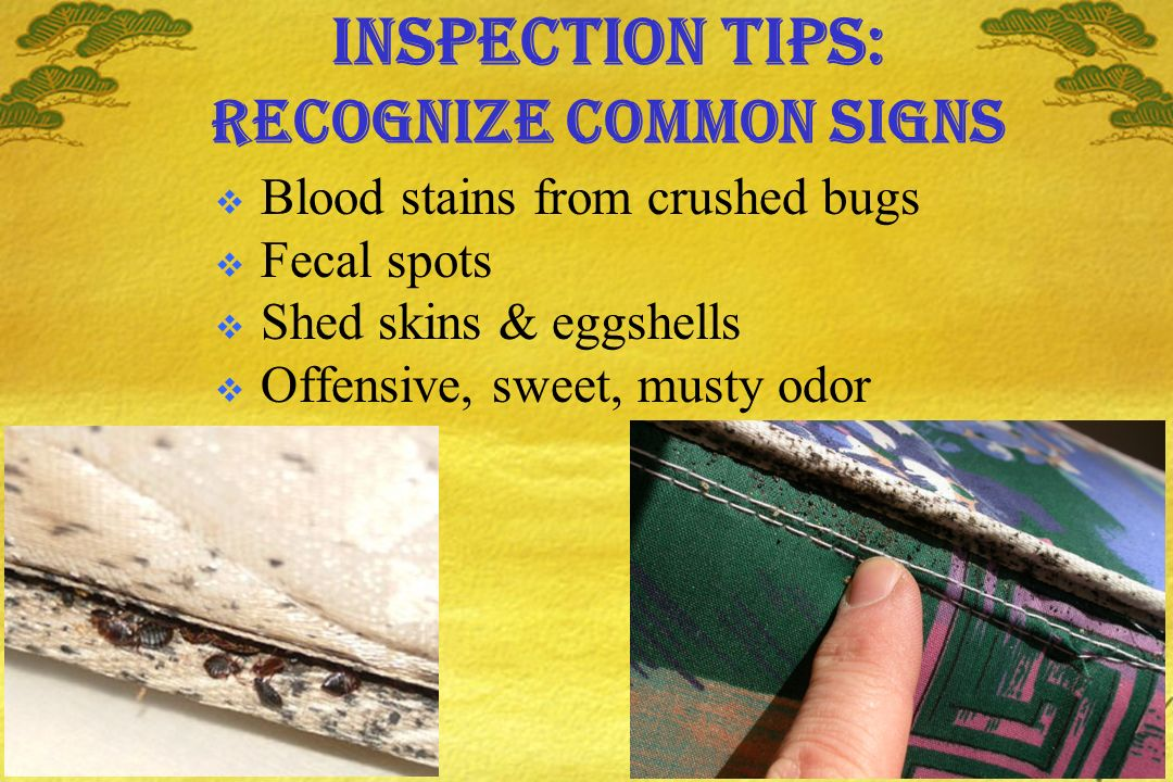 Inspection tips: recognize common signs