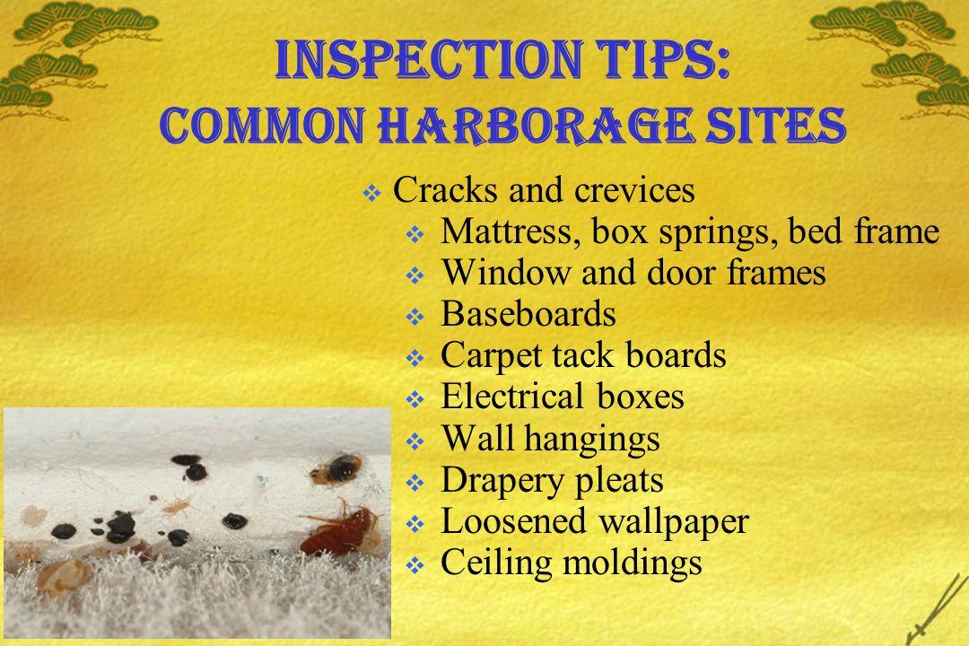 Inspection tips: common harborage sites