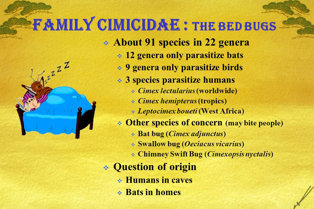 Family Cimicidae : The bed bugs