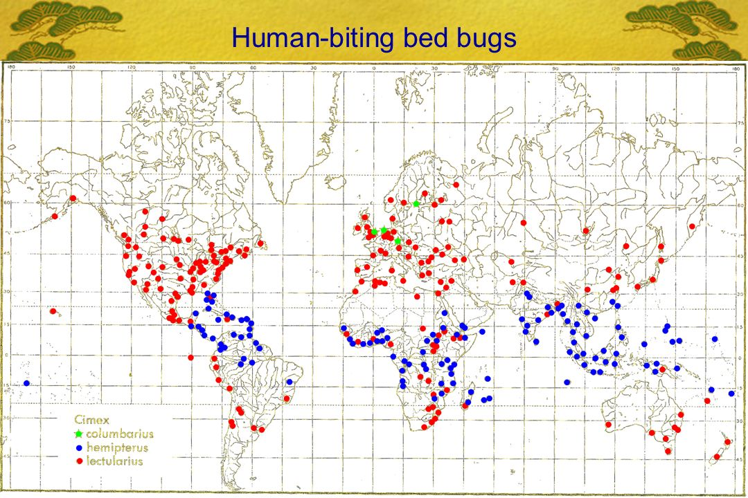 Human-biting bed bugs